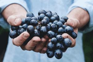 winogrona afrodyzjak